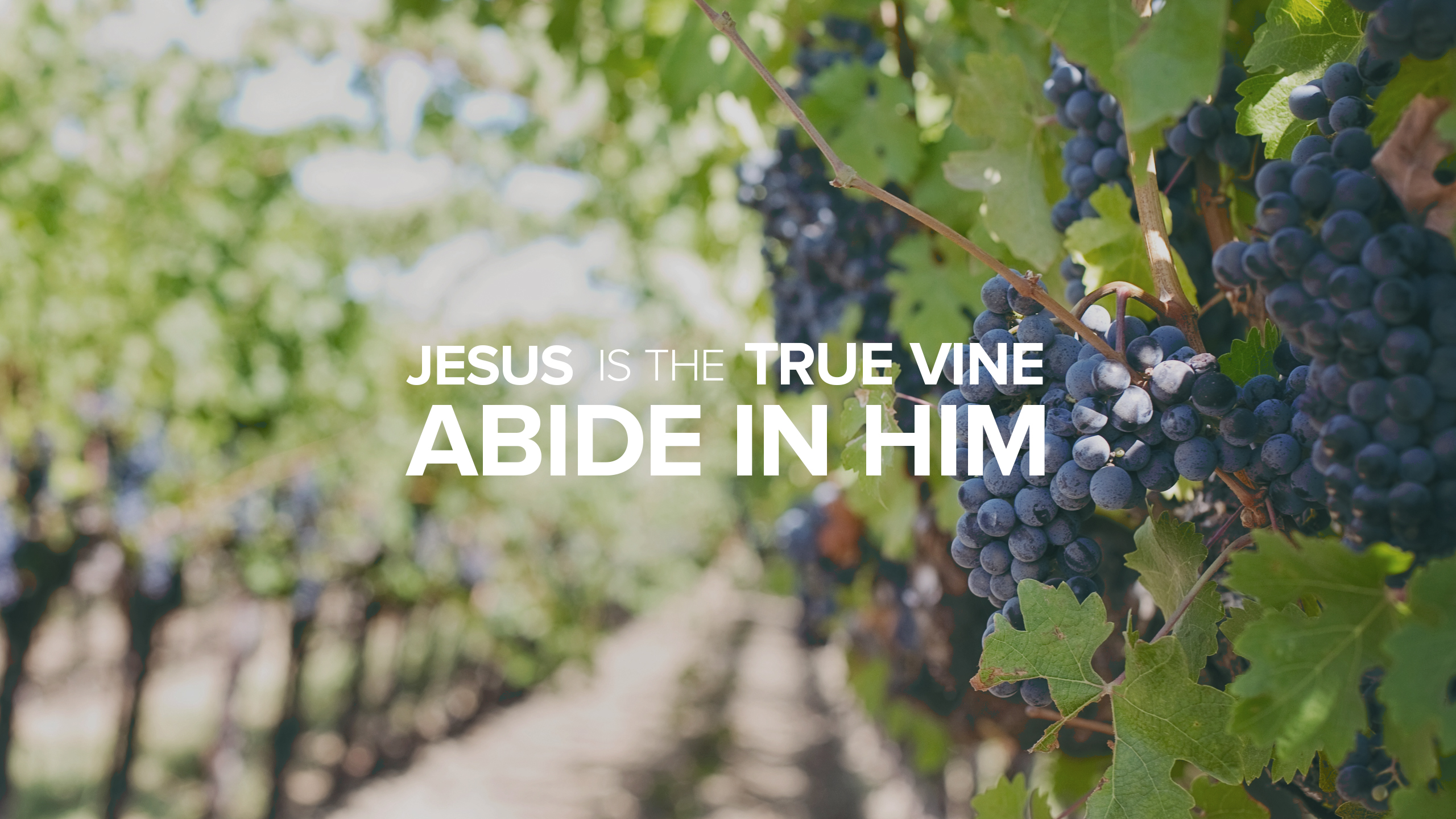 Image result for jesus the vine